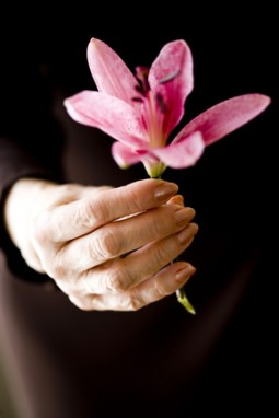 Close-up of pink flower held by elderly woman