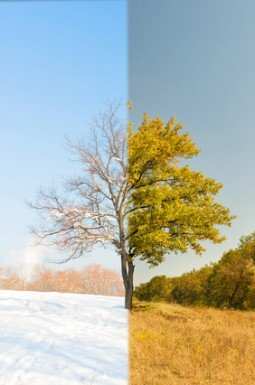 Wood changing seasons from summer to winter or vice-versa