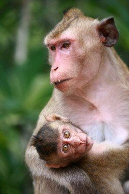 Monkey and baby