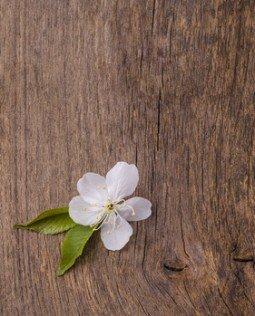 fiore di ciliegio su fondo di legno