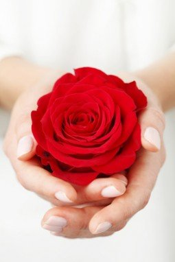 Holding a red rose