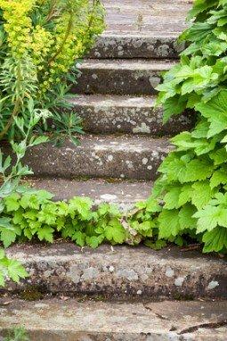 Stone steps ascending