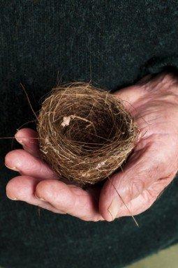 Birds nest in old mans hands