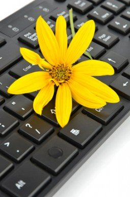 Jerusalem artichoke flower and keyboard
