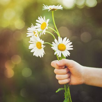 Child hand holding a flower daisy, toned photo. Focus for floiwers.