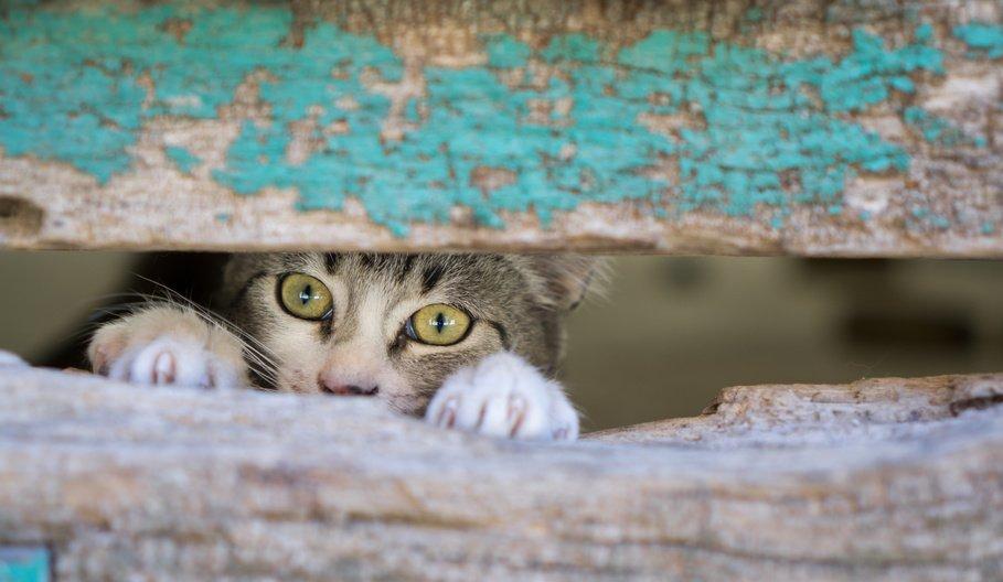 cat looking through hole in wooden door